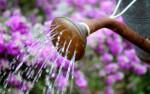 Cómo ahorrar agua al regar las plantas