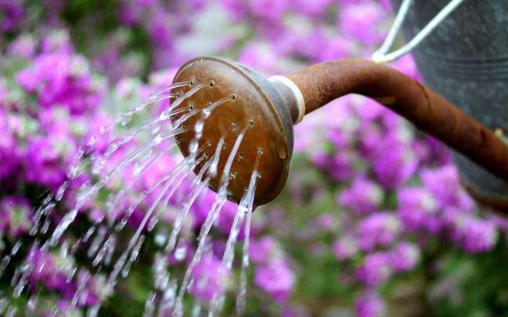 como ahorrar agua al regar las plantas