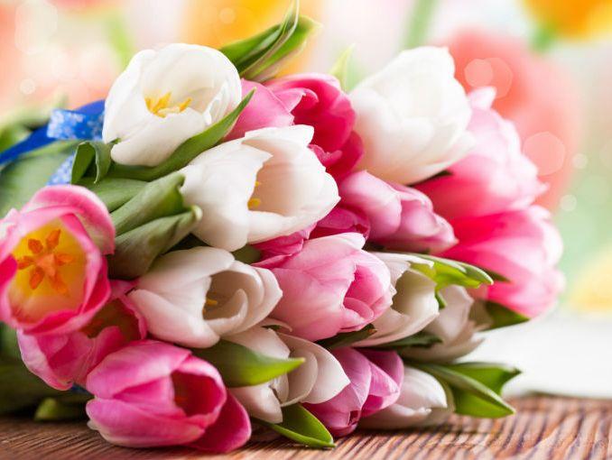 D nde comprar flores baratas online el mejor ahorro for Plantas baratas