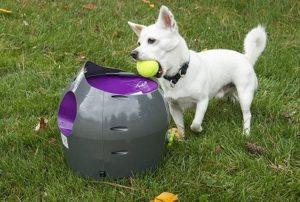 lanzador de pelotas para perros barato online